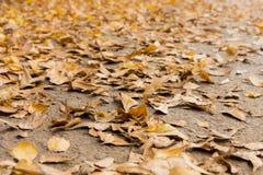 在地板上的叶子 库存照片
