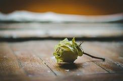 在地板上的孤独的白色玫瑰由窗口 图库摄影