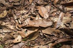 在地板上的干燥叶子 免版税库存图片