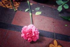 在地板上的桃红色康乃馨花谎言,作为葡萄酒样式图象的过程标志的放弃或抛弃 免版税图库摄影