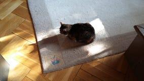 在地板上的猫 免版税库存照片