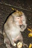 在地板上的猴子画象 免版税库存照片