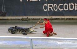 在地板上的社论展示大鳄鱼在动物园里,华欣, Th 库存图片
