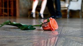 在地板上的红色玫瑰 股票视频