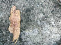 在地板上的老叶子 免版税库存照片
