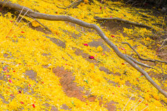 在地板上的花瓣 库存照片