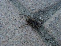 在地板上的蜘蛛 免版税库存图片