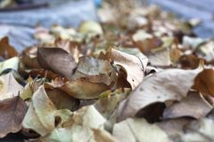 在地板上的许多棕色绿的叶子 库存照片