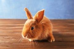 在地板上的逗人喜爱的兔宝宝 库存照片