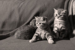 在地板上的逗人喜爱的小猫 免版税库存照片