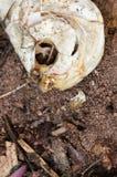 在地板上的鱼骨 免版税库存照片