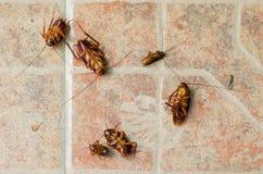 在地板上的死的蟑螂在被击中由杀虫剂以后 库存照片