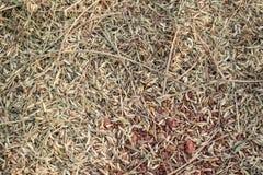 在地板上的稻秸杆 免版税库存图片
