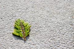 在地板上的绿色叶子 免版税库存照片