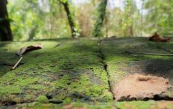 在地板安置的砖的蕨 免版税库存照片