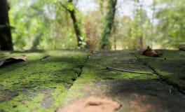 在地板安置的砖的蕨 免版税库存图片