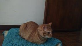 在地毯的猫 免版税库存照片