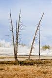 在地热地形的停止的结构树 免版税库存照片