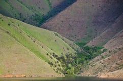在地狱峡谷倾斜紧贴的树森林  图库摄影