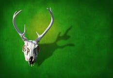 在地球绿色grunge背景的鹿头骨 库存照片