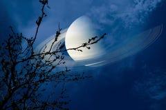 在地球附近的土星在夜空后面剪影干燥分支树 库存图片