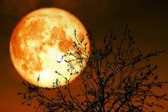 在地球附近的纯种月亮在夜空后面剪影干麸皮 免版税库存图片
