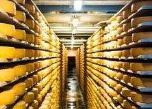 在地窖机架的乳酪 库存照片