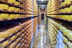 在地窖机架的乳酪 免版税库存照片