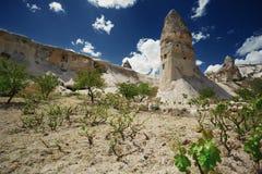 在地质岩层的Wineyard在卡帕多细亚 图库摄影