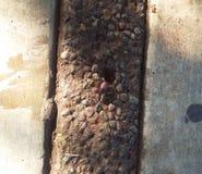在地面上的一只小的甲虫 图库摄影