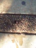 在地面上的一只甲虫 免版税库存照片