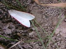 在地面上的一只美丽的蝴蝶 图库摄影