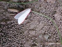 在地面上的一只美丽的蝴蝶 库存图片