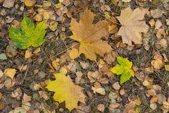 在地面上的下落的黄色叶子 库存图片
