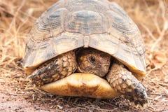 在地面上的乌龟 库存图片