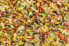 在地面上的五颜六色的下落的叶子从关闭 免版税库存图片