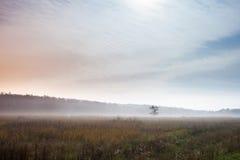 在地面上的偏僻的树与早晨薄雾 免版税库存照片
