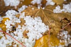 在地面上的冰雹与划分为的叶子 库存照片
