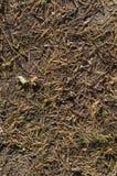 在地面上的冷杉木针秋天 背景,纹理 库存图片
