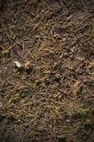 在地面上的冷杉木针秋天 背景,纹理 免版税库存照片