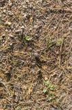 在地面上的冷杉木针秋天 背景,纹理 库存照片