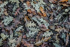在地面上的叶子创造纹理 库存图片