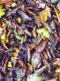 在地面上的叶子在秋天 免版税库存照片