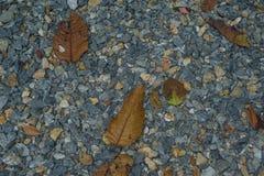 在地面上的叶子秋天,自然 库存照片