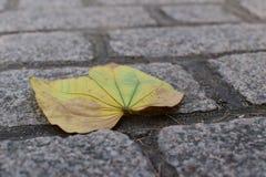 在地面上的叶子 免版税库存照片