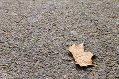 在地面上的叶子 免版税库存图片