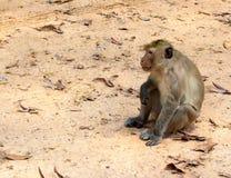 在地面上的哀伤的猴子 免版税库存照片