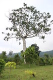 在地面上的大树 免版税库存照片