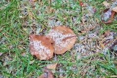 在地面上的小雪 免版税库存图片