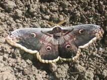 在地面上的巨大的蝴蝶 免版税库存照片